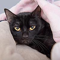 Adopt A Pet :: Willo - Wilmington, DE