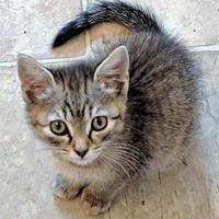 Adopt A Pet :: Harley Quinn - Smyrna, GA