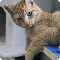 Adopt A Pet :: Landry - Richand, NY