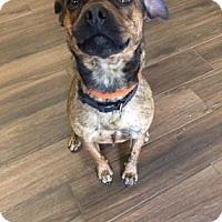 Adopt A Pet :: Marcus - Cashiers, NC