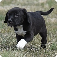 Adopt A Pet :: Lincoln - Mechanicsburg, PA