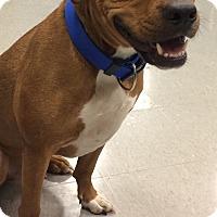 Adopt A Pet :: Jordan - Stafford, VA