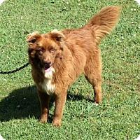 Adopt A Pet :: BOOMER - Sussex, NJ