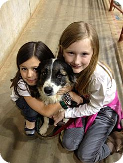 Border Collie Mix Dog for adoption in Odessa, Florida - GEORGE