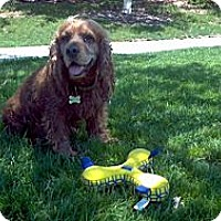 Adopt A Pet :: Red - Oceanside, CA