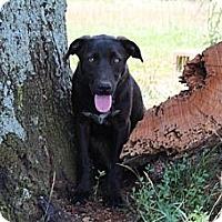 Adopt A Pet :: Destiny .. reduced fee to $300 - Foster, RI