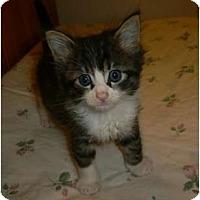 Adopt A Pet :: Machete - lake elsinore, CA