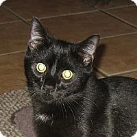 Adopt A Pet :: FINN - 2014 - Hamilton, NJ