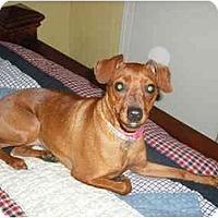 Adopt A Pet :: GiGi - Nashville, TN