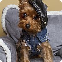 Adopt A Pet :: Frasier - Baton Rouge, LA