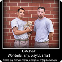 Adopt A Pet :: Emma - Indian Trail, NC