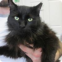 Adopt A Pet :: Mia - Trevose, PA