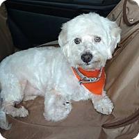 Adopt A Pet :: Tony - San Antonio, TX