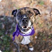 Adopt A Pet :: Roxanne - Lakeland, FL