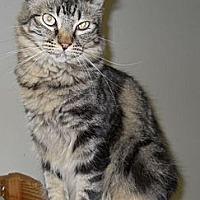 Adopt A Pet :: Gina - Ridgecrest, CA