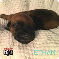 Adopt A Pet :: Ethan - New York, NY