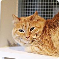 Adopt A Pet :: Leo - Lincoln, NE