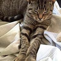 Adopt A Pet :: Kayla - Toledo, OH