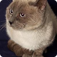 Adopt A Pet :: Biggie - Gilbert, AZ