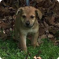 Adopt A Pet :: Sasha - Morehead, KY