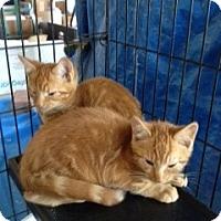 Adopt A Pet :: Miss Molly - Ft. Lauderdale, FL