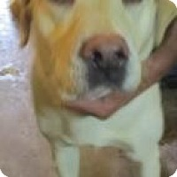 Adopt A Pet :: Sandy (ADOPTED!) - Chicago, IL