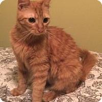 Adopt A Pet :: Casey - Colorado Springs, CO