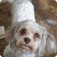 Adopt A Pet :: Chole - Detroit, MI