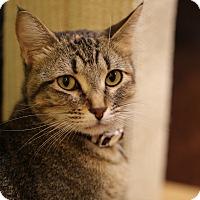 Adopt A Pet :: Spella Ella - The Colony, TX