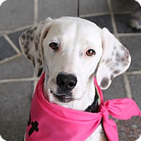 Adopt A Pet :: Snowball -Courtesy List - Richmond, VA