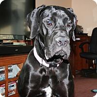 Adopt A Pet :: Jessie - St. Louis, MO