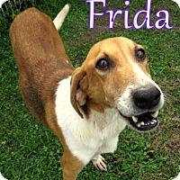 Adopt A Pet :: Frida - Georgetown, SC