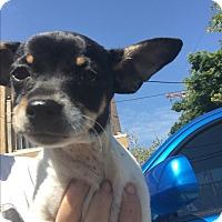 Adopt A Pet :: Oreo - LAKEWOOD, CA