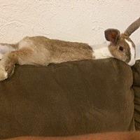 Adopt A Pet :: Marge-adoption pending - lake elsinore, CA