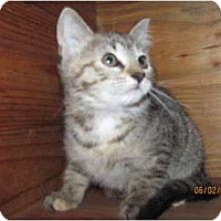 Adopt A Pet :: Lily - Oxford, CT