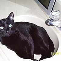 Adopt A Pet :: Hugo - Walnut Creek, CA