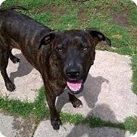 Adopt A Pet :: Wendy - Von Ormy, TX