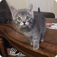 Adopt A Pet :: Roxanna - Hamilton, ON