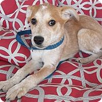Adopt A Pet :: Prissy - Memphis, TN
