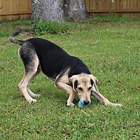 Adopt A Pet :: LipNickie - Vidor, TX