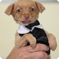 Adopt A Pet :: David Karnes - Dalton, GA
