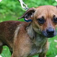 Adopt A Pet :: Newman - Chester Springs, PA