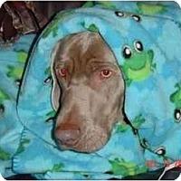 Adopt A Pet :: Foster Homes & Volunteers - Attica, NY