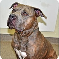 Adopt A Pet :: Tyson - Port Washington, NY