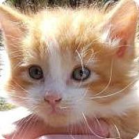 Adopt A Pet :: Viola - Stanford, CA