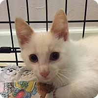 Adopt A Pet :: Phoenix - Stafford, VA
