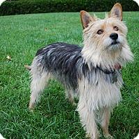 Adopt A Pet :: Rascal - Richmond, VA