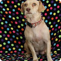 Adopt A Pet :: Rio - Yucaipa, CA