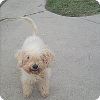Adopt A Pet :: Fifi - Brownsville, TX