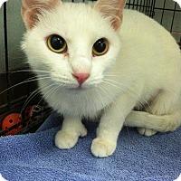 Adopt A Pet :: Pollyanna - Chicago, IL
